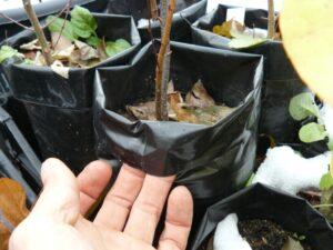 Как выбрать контейнеры для садового питомника?