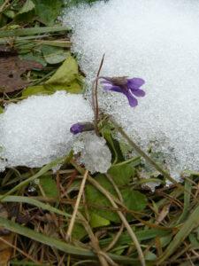 Климатическая характеристика ботанического сада 365