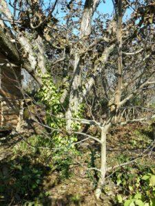 Микроклиматические зоны и размещение растений в саду