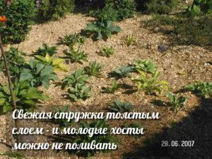 Ботанический сад «365»
