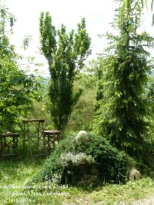Почему ваш сад не так красив, как хочется? Типичные ошибки при построении садовых композиций.