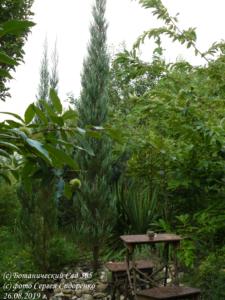 Плюсы и минусы самостоятельного проектирования сада. Звать дизайнера или нет?