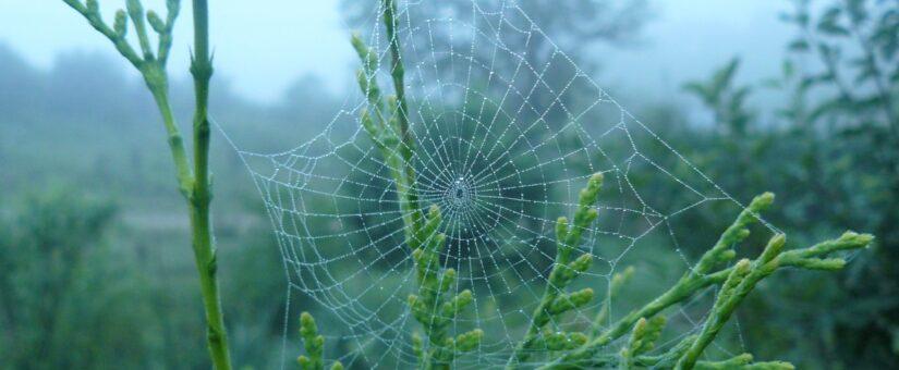 Вредители и болезни в саду